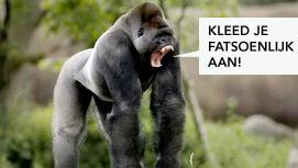 gorilla-schrikt