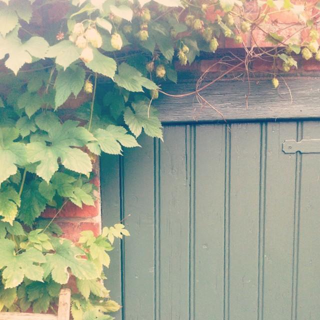 tuinhuis-begroeid-met-hop